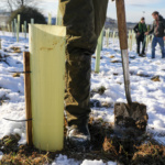 Alma Park - Tree planting