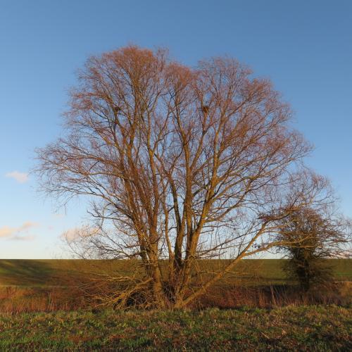 IMG 0403-trees