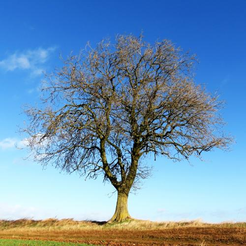 IMG 0420-trees