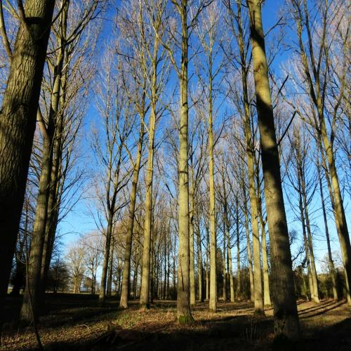 IMG 0437-trees