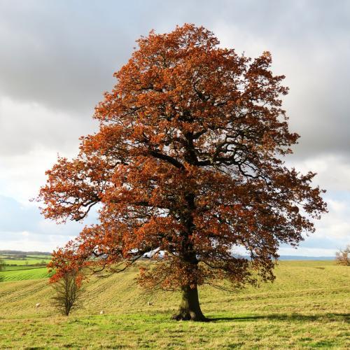 IMG 0500-trees