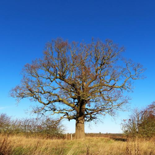 IMG 0591-trees