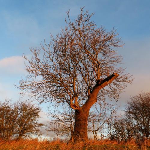 IMG 0824-trees