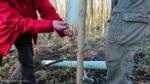 Bellmount Plantation - Tree planting action
